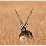 Stay And Safari In Dajipur Wildlife Sanctuary